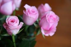 rosen Stockfotos