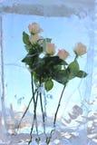 rosen Stockfoto