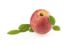 Rosen-Apfel mit Blättern Lizenzfreie Stockfotos