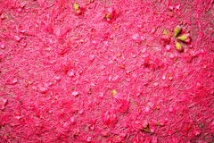 Rosen-Apfelblütenstaub Lizenzfreies Stockfoto