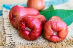 Rosen-Apfelfrucht Lizenzfreie Stockbilder
