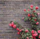 Rosen auf Backsteinmauer Stockbild
