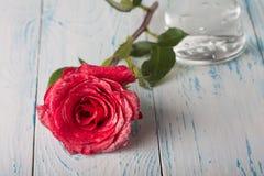 Rosen auf der Tabelle Stockbild