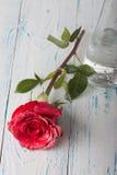 Rosen auf der Tabelle Stockfoto