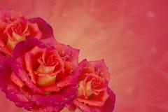 Rosen auf einem rosa background collage Stockbild