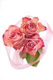 Rosen auf Weiß Stockbilder