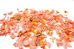 Rosen-Blätter Stockfoto