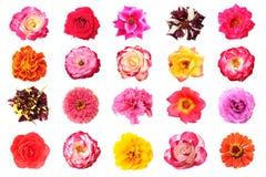 Rosen-Blume Stockbild