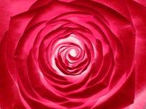 Rosen-Blume, Abschluss oben Lizenzfreie Stockfotografie