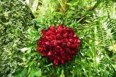 Rosen-Blume auf Garten Lizenzfreies Stockbild