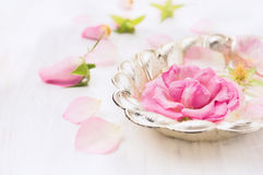 Rosen-Blume in der silbernen Schüssel mit Wasser fällt auf weißes hölzernes, Badekurort Stockfotos