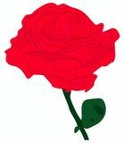 Rosen-Blume im Vektor Stockfotografie