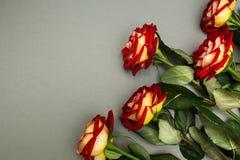 Rosen-Blumen auf einem grauen Hintergrund lizenzfreies stockbild