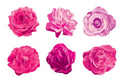 Rosen-Blumen eingestellt Stockbilder
