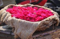 Rosen-Blumen für das religiöse Angebot Lizenzfreie Stockfotografie