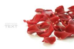 Rosen-Blumenblätter Lizenzfreie Stockfotos
