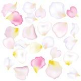 Rosen-Blumenblätter Lizenzfreie Stockfotografie