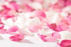 Rosen-Blumenblätter Stockfoto