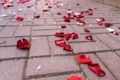 Rosen-Blumenblätter auf der Pflasterung unter defektem Glas Lizenzfreie Stockbilder