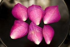Rosen-Blumenblätter auf einer Platte Lizenzfreie Stockfotografie