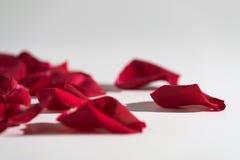 Rosen-Blumenblätter auf weißem Hintergrund stockfotos