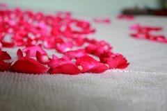 Rosen-Blumenblätter besprüht auf dem Bett lizenzfreie stockfotos
