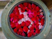 Rosen-Blumenblätter in einer Steinschüssel Stockbilder