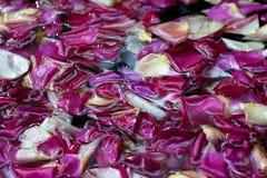 Rosen-Blumenblätter im Wasser, Winkelsicht Stockfoto