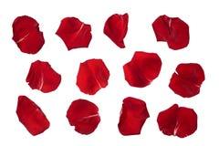 Rosen-Blumenblätter lokalisiert auf Weiß stockfotos