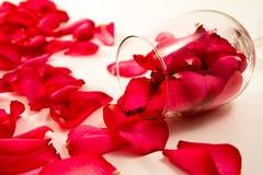 Rosen-Blumenblätter und Glas Stockbild