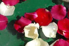 Rosen-Blumenblathintergrund Lizenzfreie Stockbilder