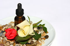 Rosen-Blumenblatt Aromatherapy Lizenzfreie Stockfotografie