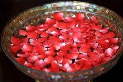 Rosen-Blumenblatt-Badekurort Stockbild