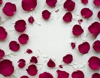 Rosen-Blumenblatt blüht mit Kopienraum auf weißem Hintergrund Lizenzfreie Stockfotos