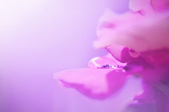 Rosen-Blumenblatt mit Tautropfen Lizenzfreie Stockfotos
