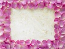 Rosen-Blumenblatt-Rand Stockfoto