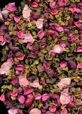 Rosen-Blumenblattbeschaffenheit Lizenzfreie Stockbilder