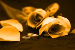 Rosen-Blumenblatthochzeitsband Stockbilder