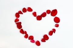 Rosen-Blumenblattisolat auf einem roten Designherzen des weißen Hintergrundes lizenzfreie abbildung