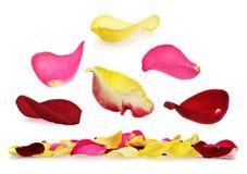 Rosen-Blumenblattset Stockbild