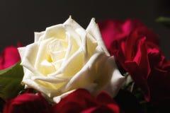 Rosen-Blumengarten Lizenzfreie Stockbilder