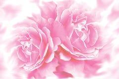 Rosen-Blumenhintergrund Lizenzfreies Stockbild