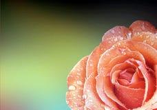 Rosen-Blumenhintergrund Lizenzfreie Stockfotografie