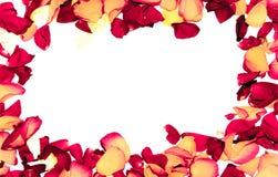 Rosen-Blumenrahmen als romantische Karte auf weißem Hintergrund Stockfoto