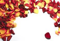 Rosen-Blumenrahmen als romantische Karte auf weißem Hintergrund Lizenzfreie Stockfotos