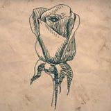 Rosen-Blumenzeichnung Stockbild