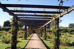 Rosen-Bogen an den königlichen botanischen Gärten, Kew, London, England Stockfotos