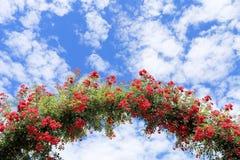Rosen-Bogen im Garten Lizenzfreies Stockfoto
