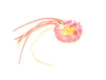 Rosen-dekorative Blume mit rosafarbenen Farbbändern und Gold Lizenzfreies Stockbild