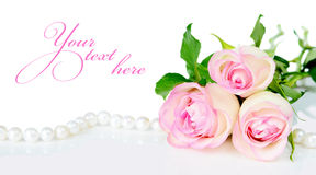 Rosen in den Tropfen des Taus Stockbilder